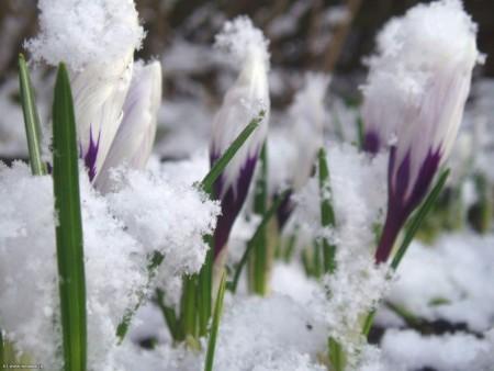 Работы цветоводов в марте