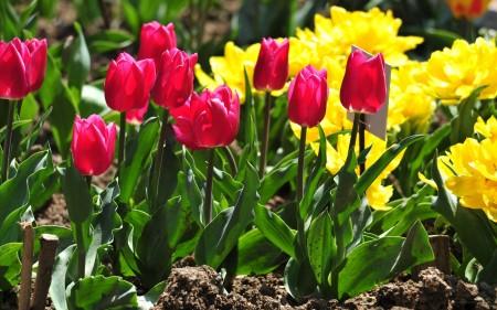 Работы цветоводов в мае
