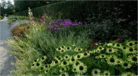 Цветы в саду.
