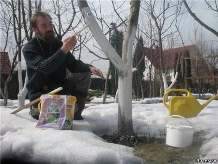 Февральские садовые работы.