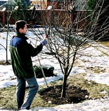 Работы по обрезки деревьев в марте.