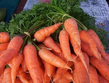 Выращивание сладкой моркови.