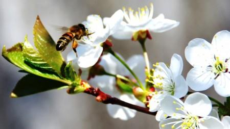 Обработка сада весной от вредителей