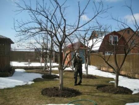 Мартовская обработка деревьев от вредителей.