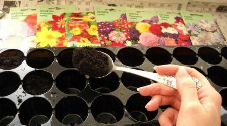 Работы по посеву цветов в феврале в полном разгаре.