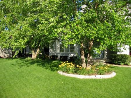 Газон в саду под деревьями.