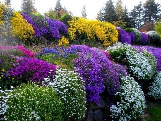 Выращивание рассады многолетних цветов