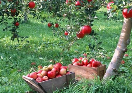 Июль на даче: какие работы ожидают садоводов и огородников
