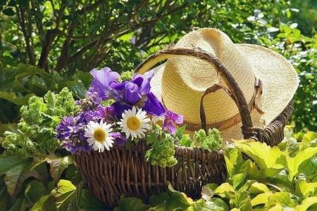 В июне на даче: что будем делать в саду и на огороде