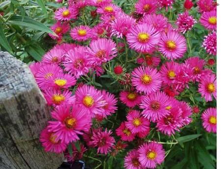 Сентябрьские заботы цветоводов