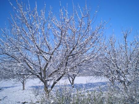 Работы садоводов и огородников в декабре.