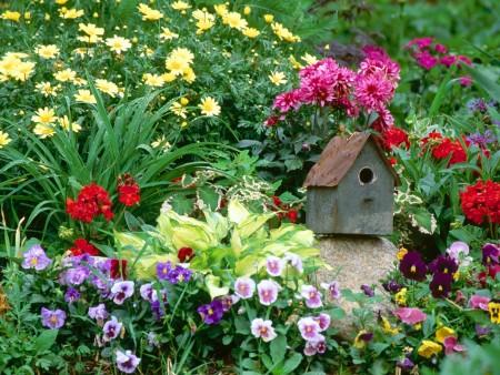 Заботы цветоводов в середине лета.