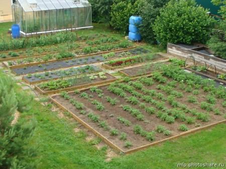 Работы огородников в июне.