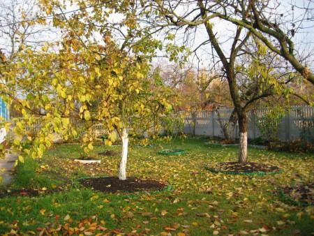 Что предстоит сделать в саду в сентябре.