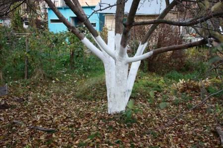 Работа в саду осенью.