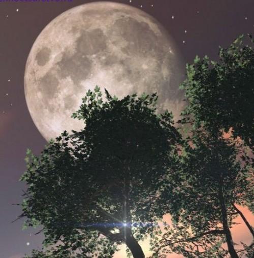 Лунный посевной календарь садоводов и огородников на 2017 год.