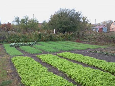 Огород в середине осени.