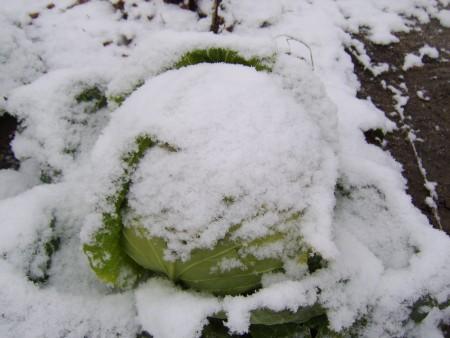 В ноябре выпал снег.
