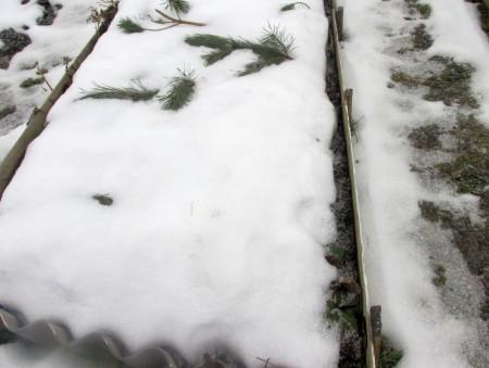 И в ноябре на огороде ещё можно сеять морковь.