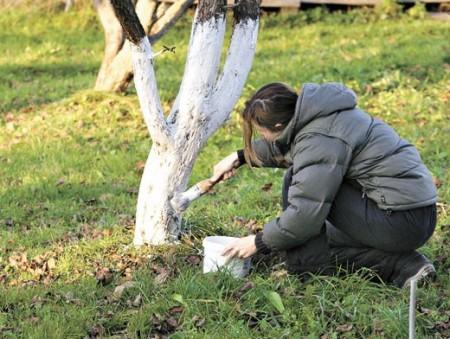 Ноябрь на даче: что предстоит сделать в саду и огороде