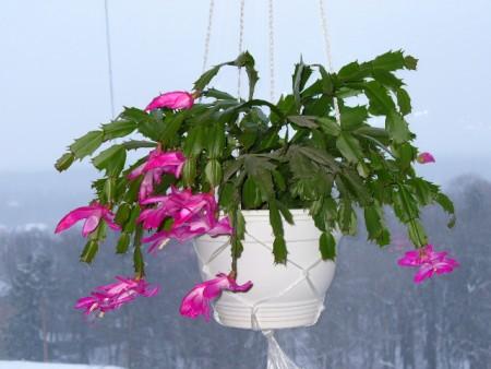 Чем занимаются цветоводы зимой.