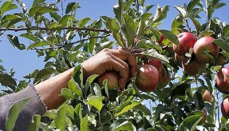 Осенью надо собирать яблоки.
