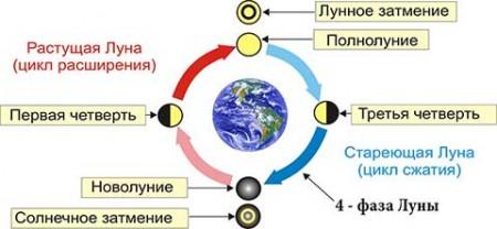 Фазы Луны в Лунном календаре садоводов и огородников.