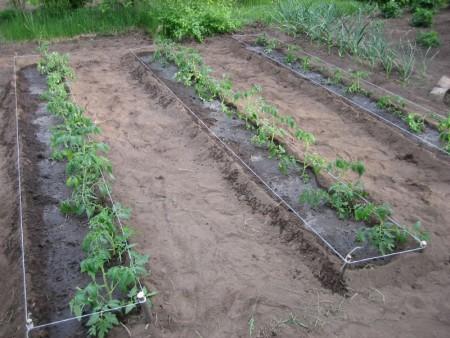Влияние фаз Луны на садовые растения