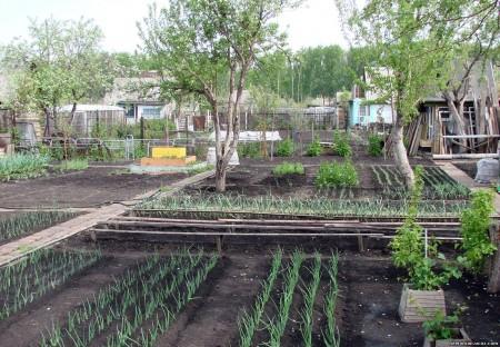 Лунный календарь садоводов и огородников.