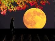 Влияние ночного светила на растительную жизнь.