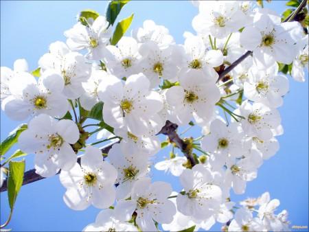 Лунный посевной календарь на май 2016 года.