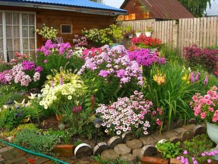 Чем подкормить многолетние цветы весной