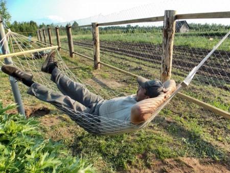 Что посадить на даче, чтобы поменьше ухаживать за огородом