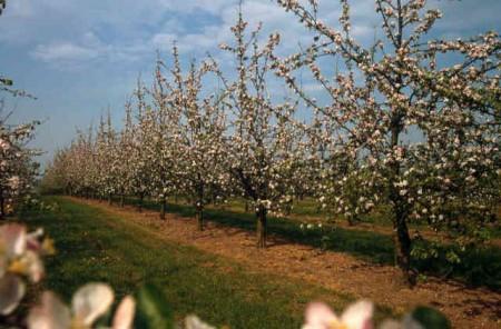 Почему деревья в саду плохо плодоносят