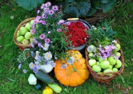 Лунный календарь садоводов, огородников на август.