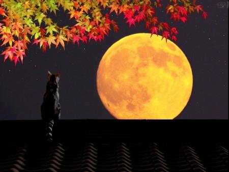 Лунный календарь садоводов и огородников на октябрь 2016