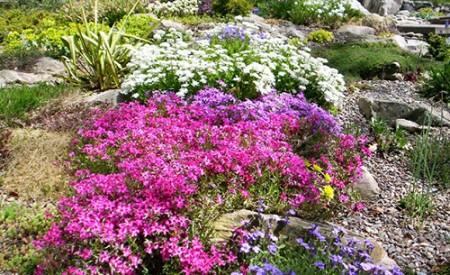 Почвопокровные многолетники для сада.