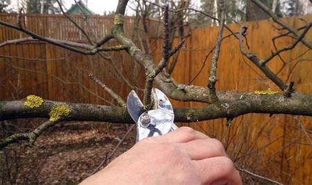 Благоприятные дни для обрезки деревьев в октябре.