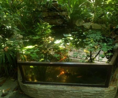 Маленькое озерко с рыбками.