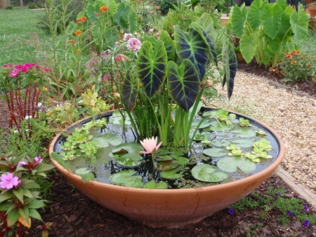Пруд-чаша в саду