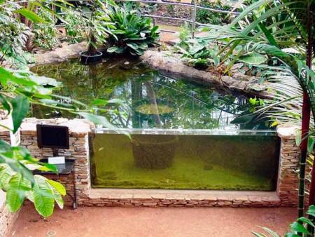 На фото садовый аквариум