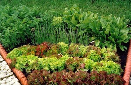 Овощи растут вместе с цветами