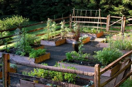 Красивые грядки на красивом огороде