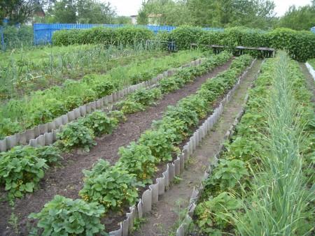 Где лучше посадить ягоду