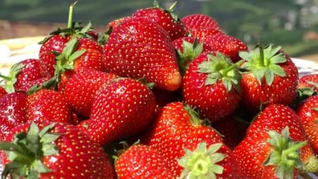 Спелые ягоды.