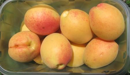 Плоды графини