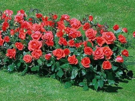 Цветы на газоне.