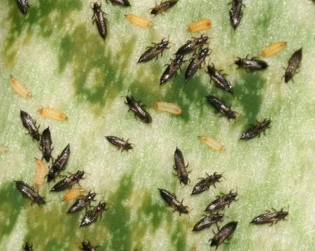Вредные насекомые на цветах