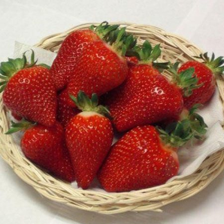 Клубника Азия описание сорта и особенности выращивания