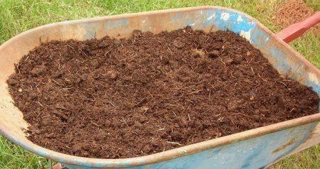 Удобрение черной смородины.